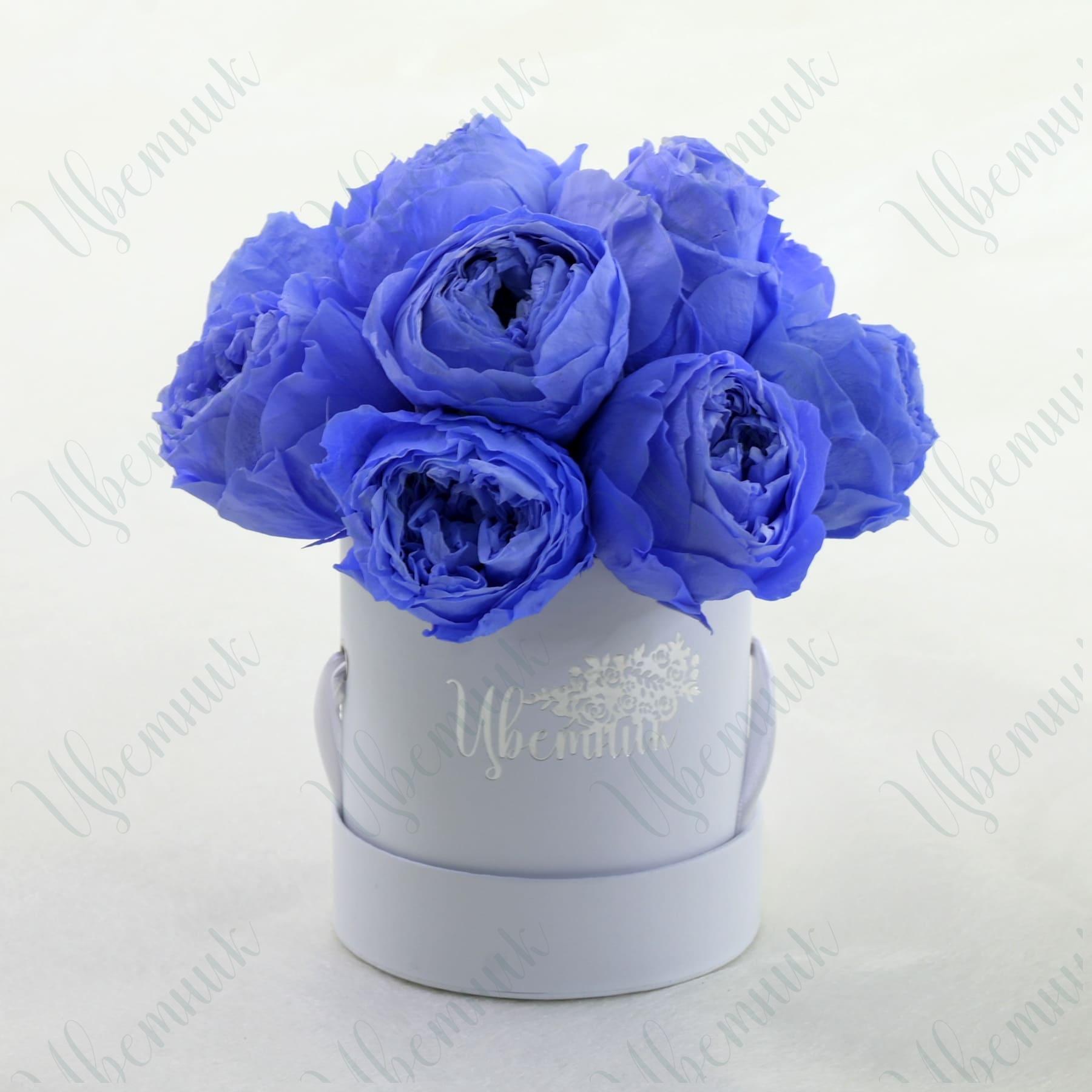 Стабилизированные черничные розы в круглой коробке 10 шт.