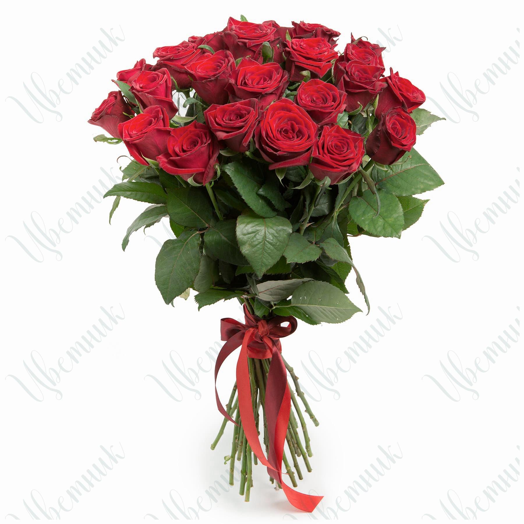 Букет из 35 красных роз, перевязанный лентой