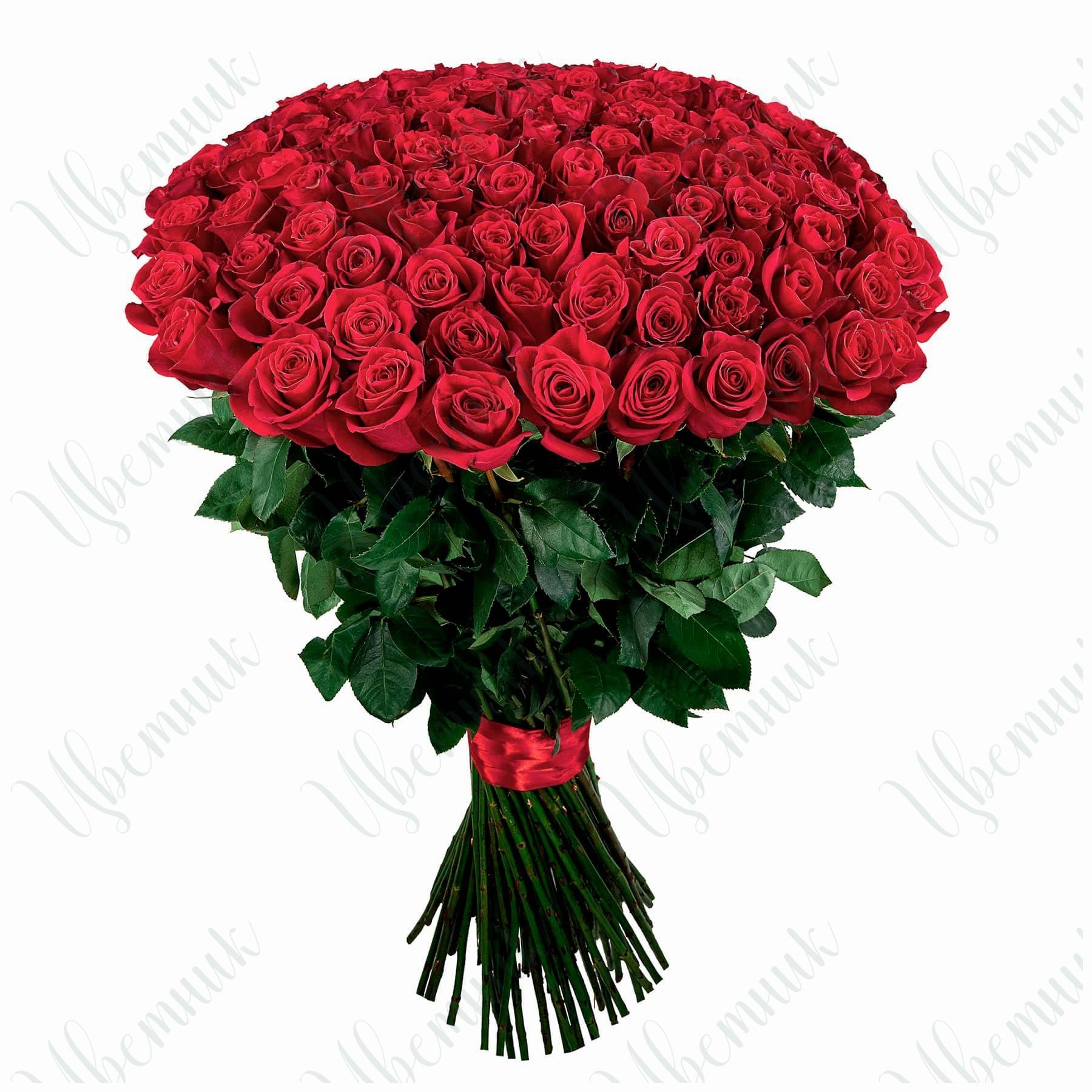 Роскошный букет из 101 красной розы, высотой 80 см