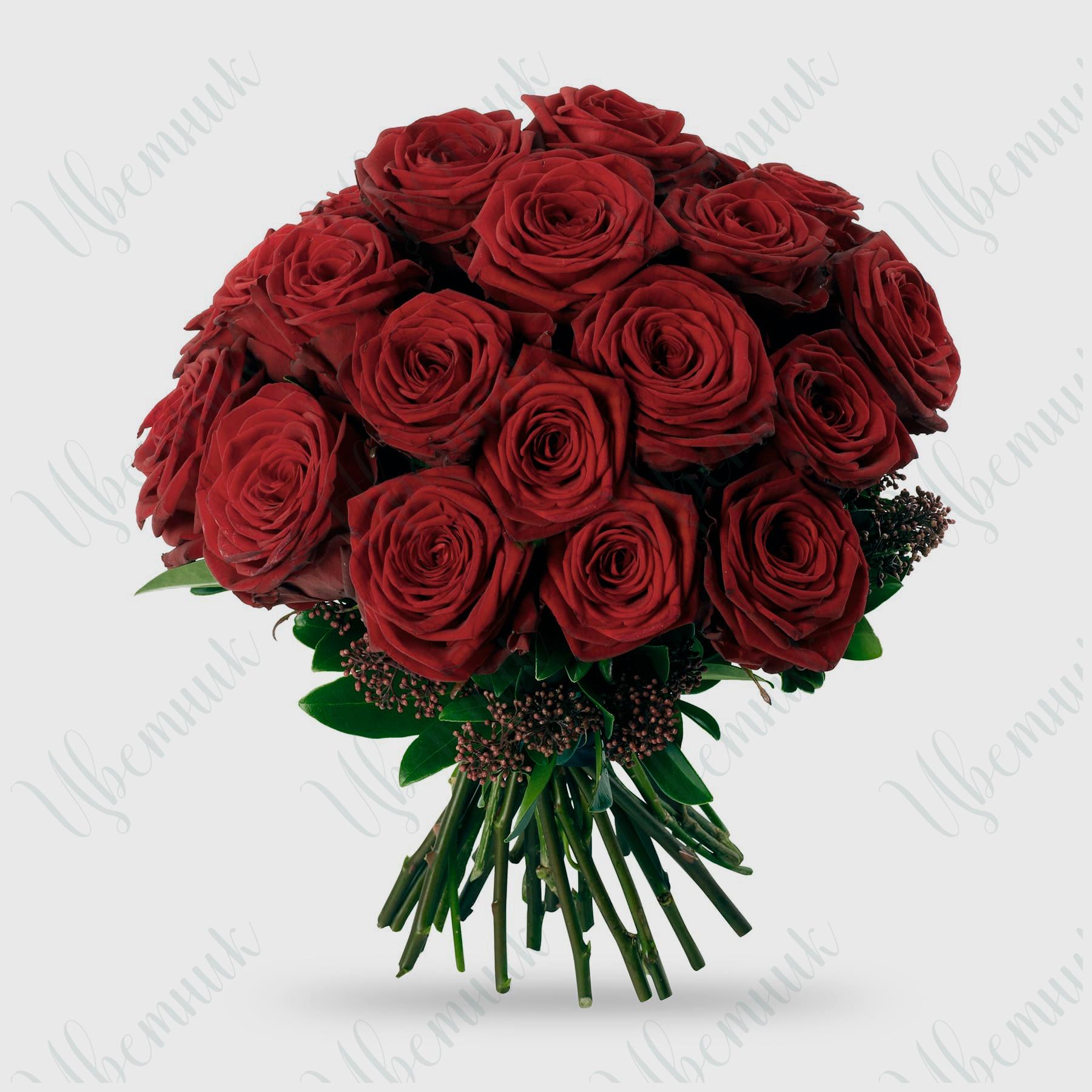 Букет из 31 красной розы и скиммии высотой 50 см