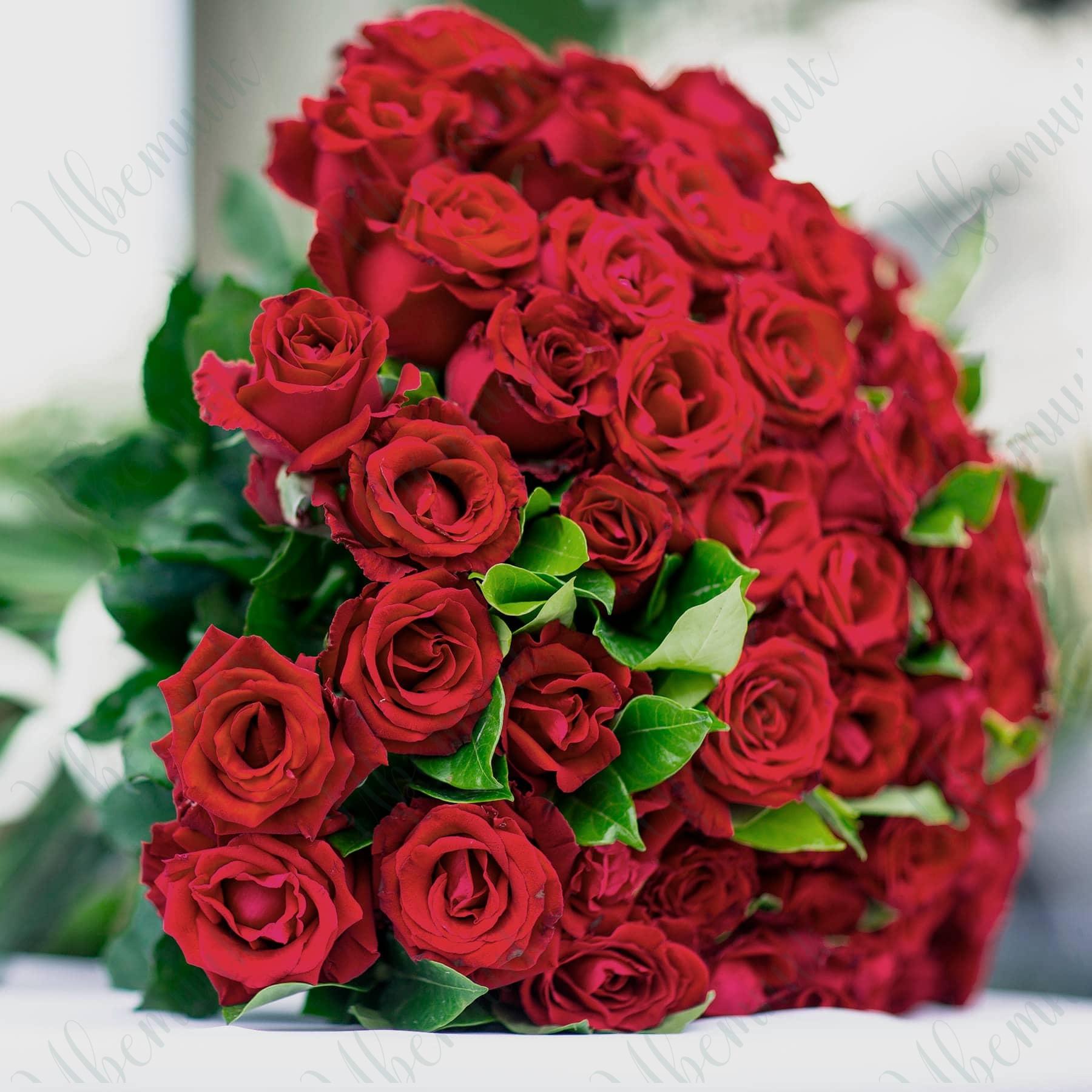 Букет из 51 красной розы с листиками салала