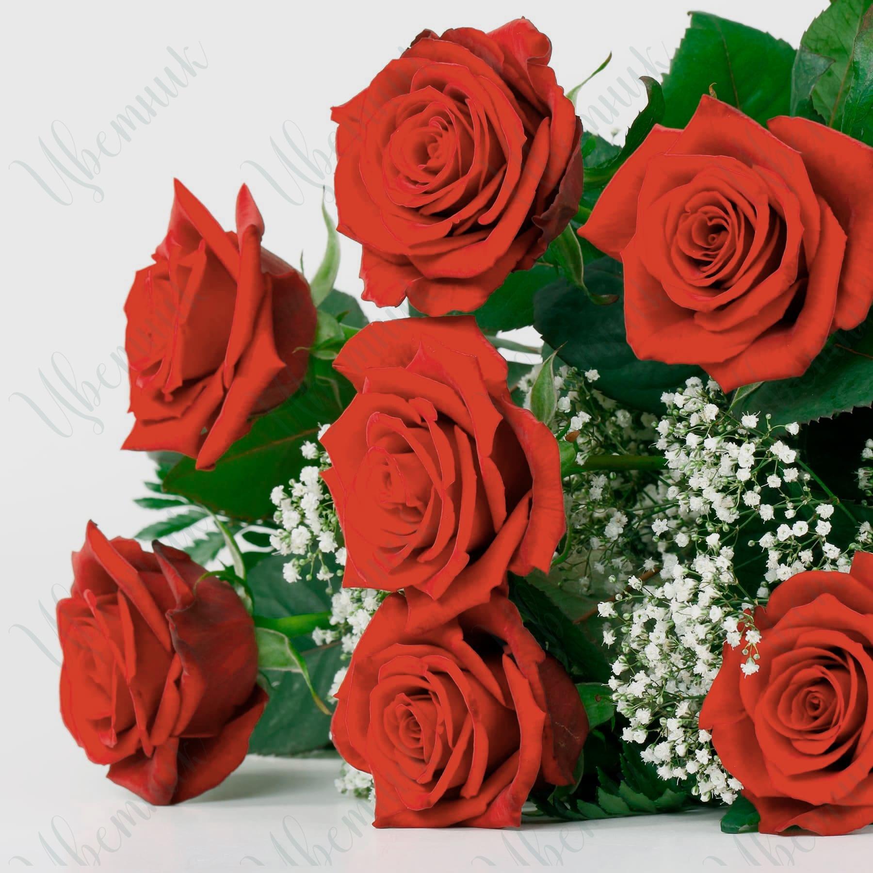 Букет-комплимент из красных роз и гипсофилы