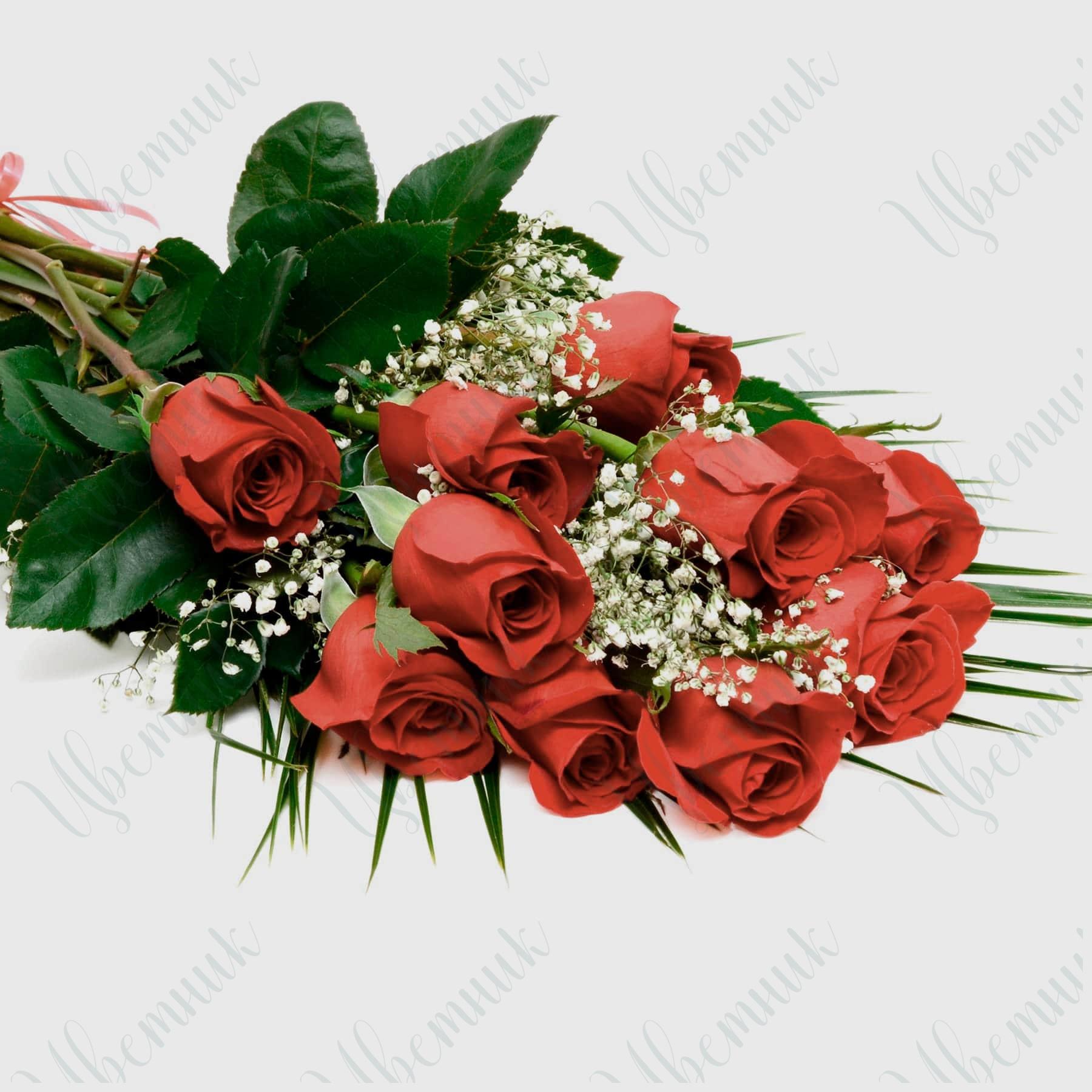 Букет из 11 Красных роз и гипсофилы