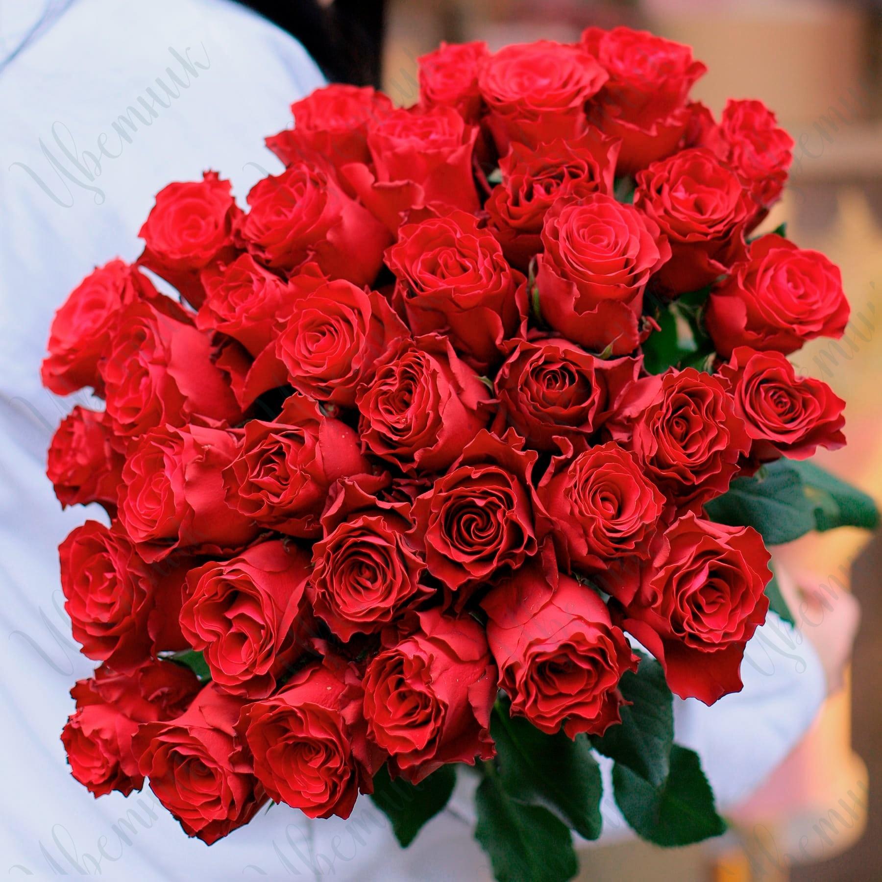 35 Красных роз под ленту