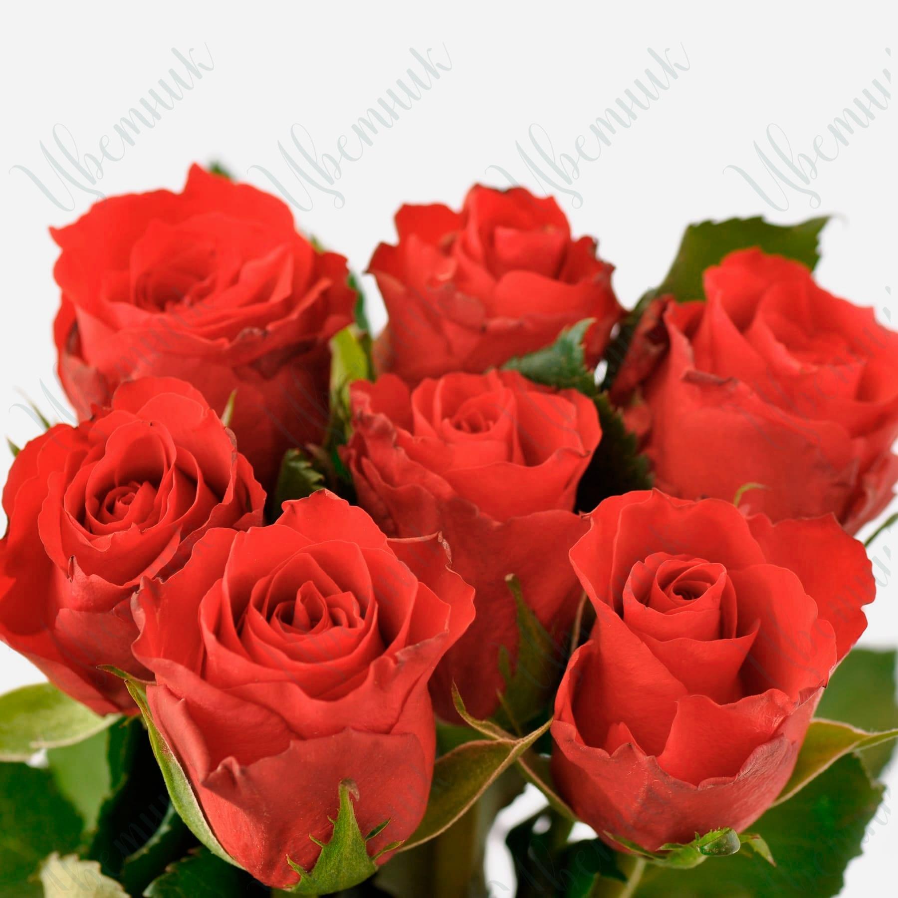 Букет из 7 алых роз под ленту