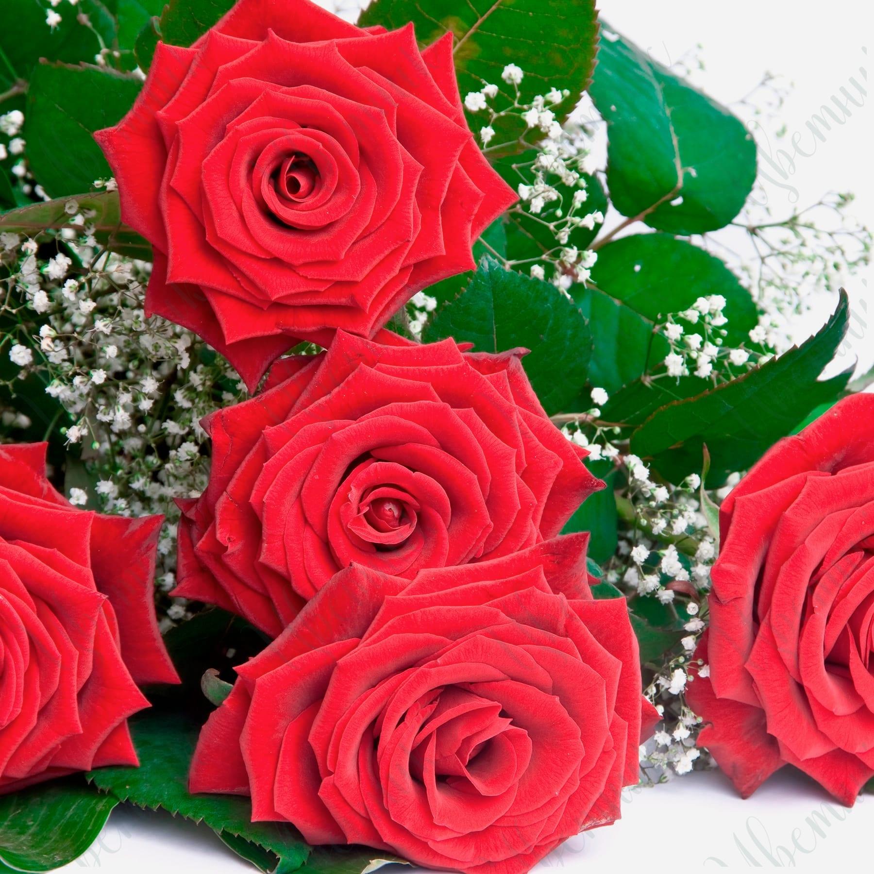 Букет из 5 Красных роз и гипсофилы