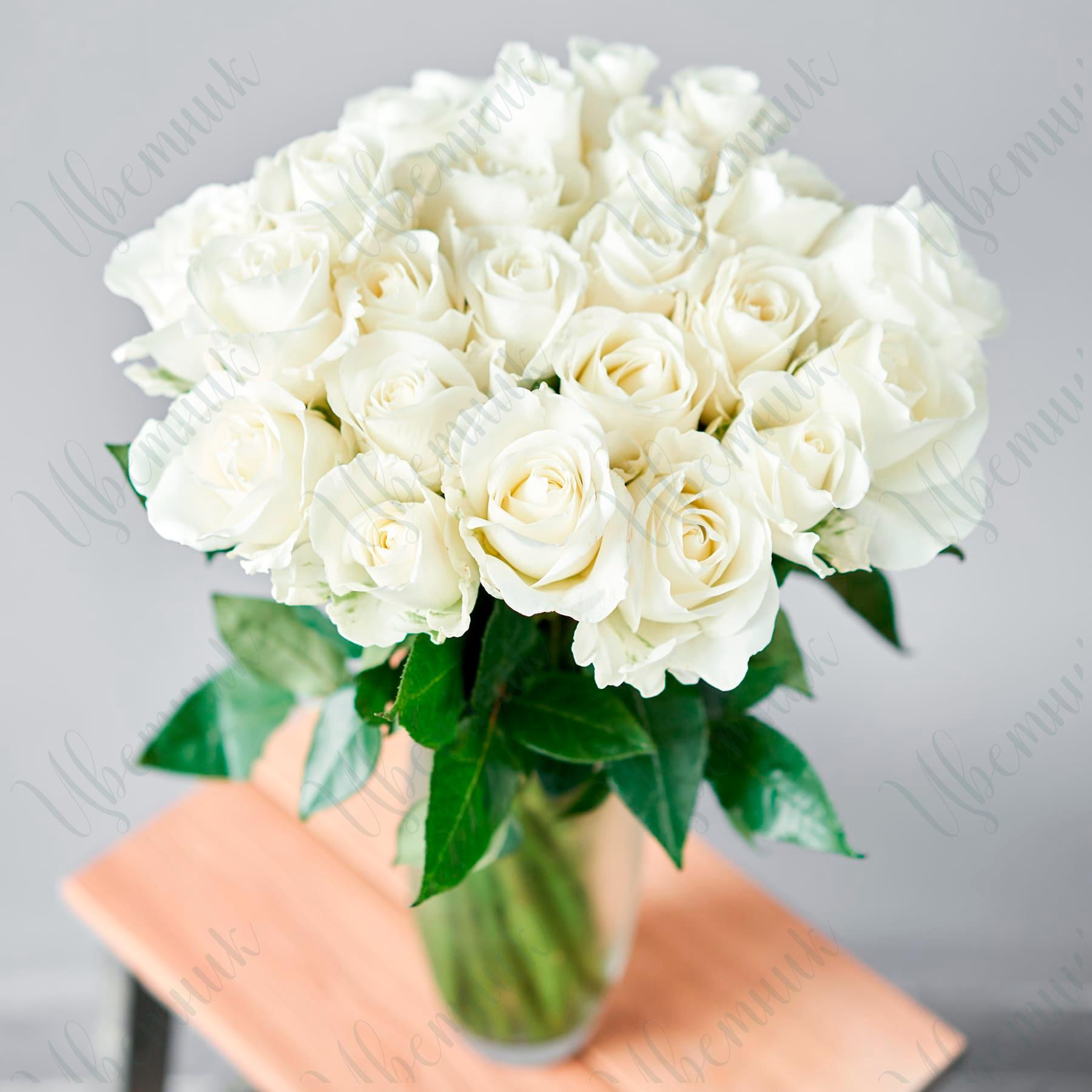 25 белых роз, перевязанных лентой