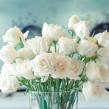 Букет из 25 роз белого цвета, высотой 50 см