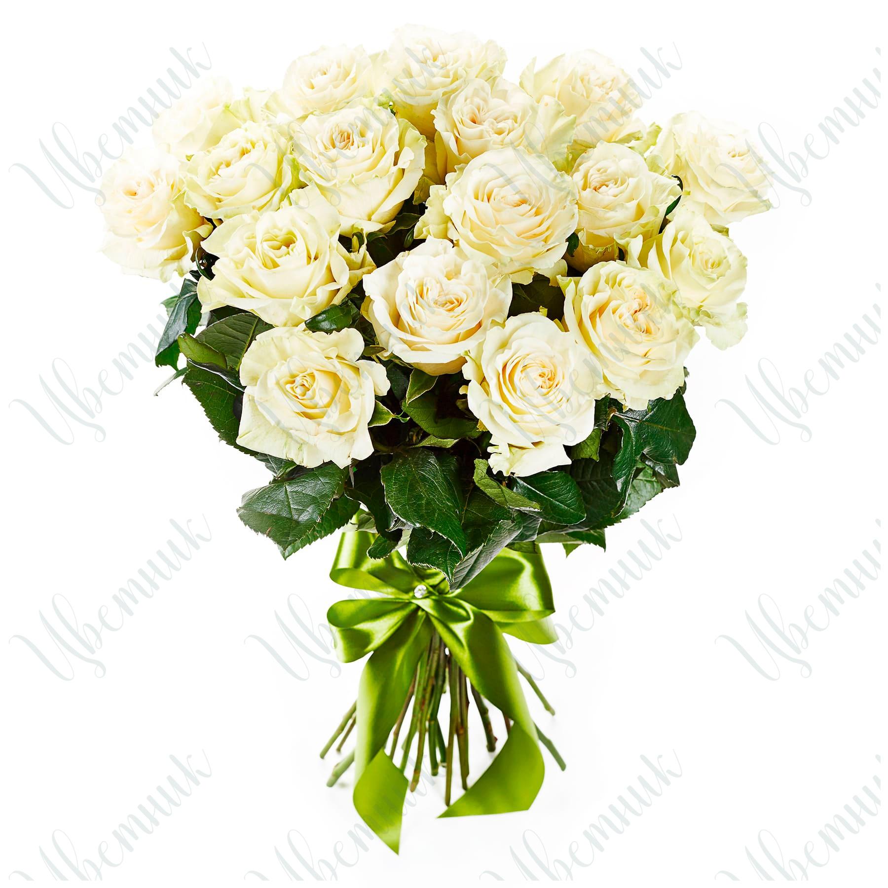 Букет из 25 белых роз с бантом