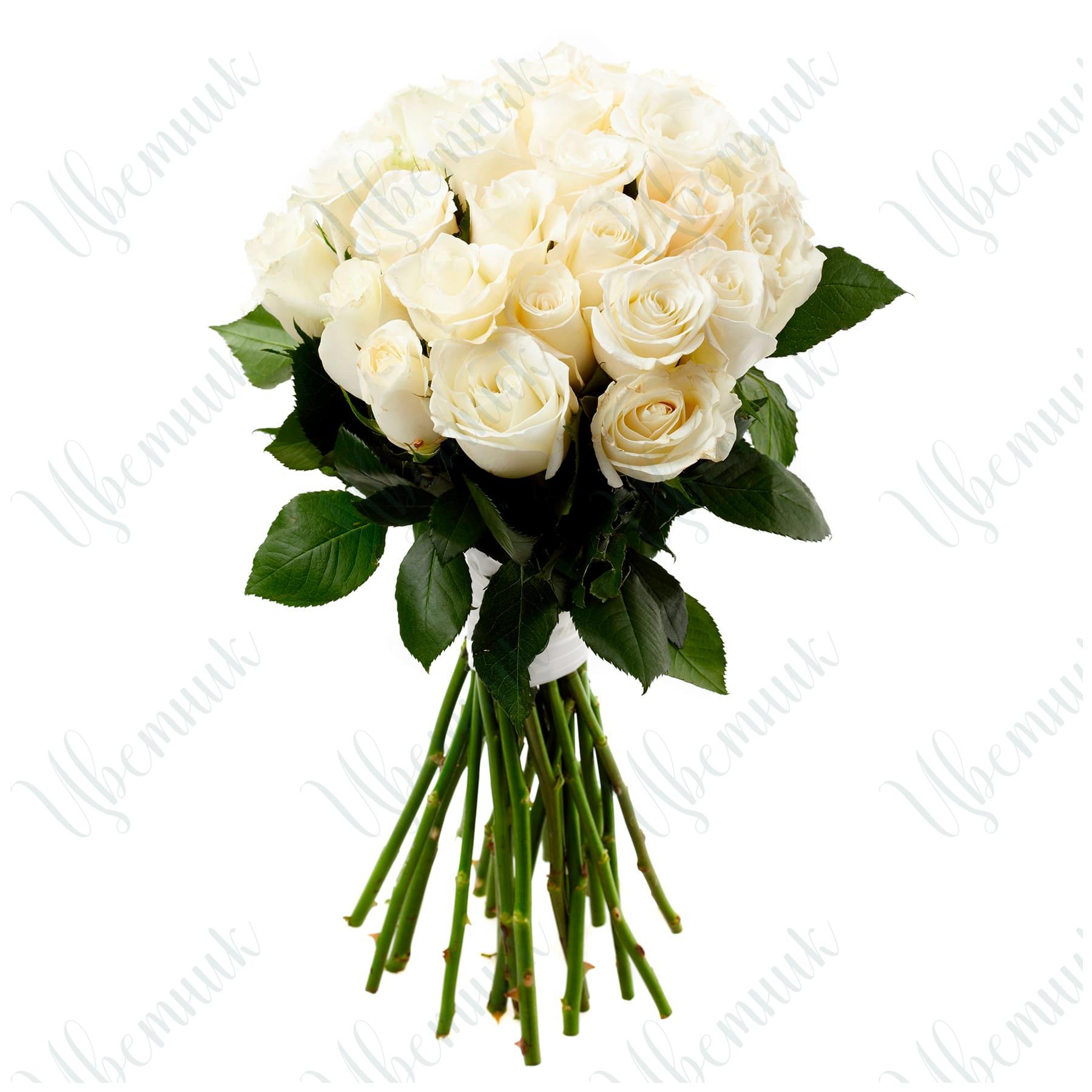 Букет из 25 белых роз высотой 80 см