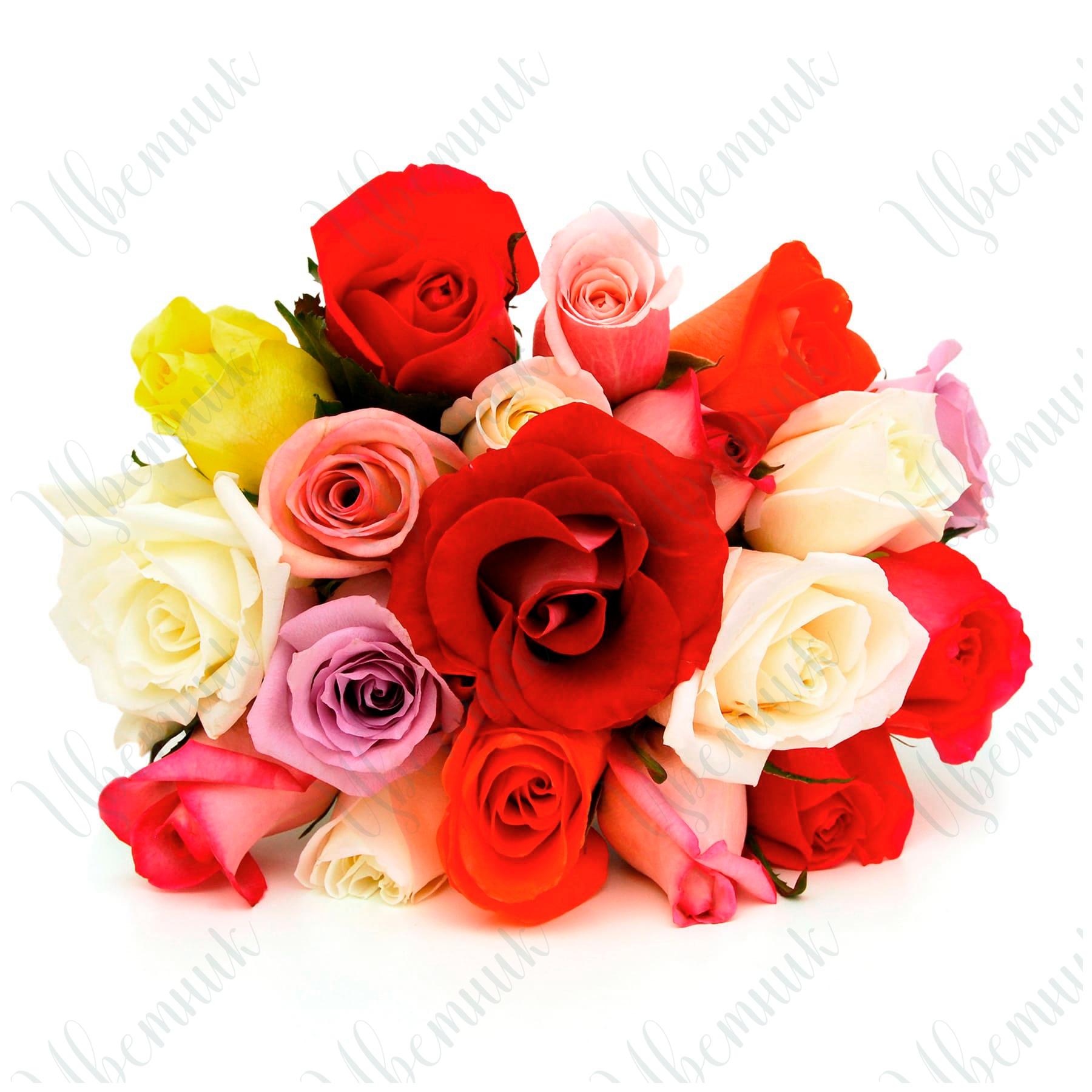 Букет из разноцветных роз