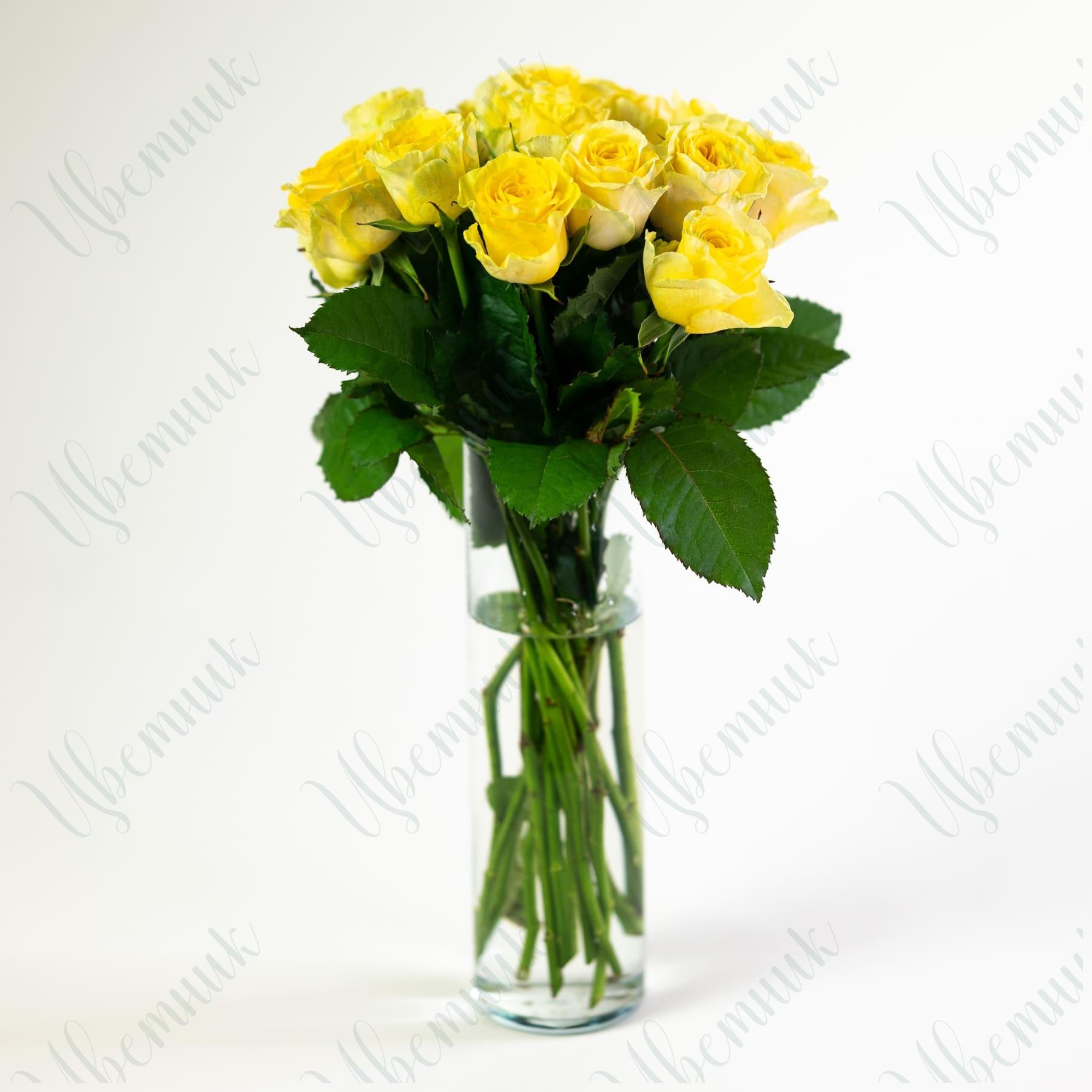 Роза Илиос 50-60 см 1 шт.