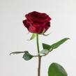 Роза Ред Наоми 50-60 см 1 шт.