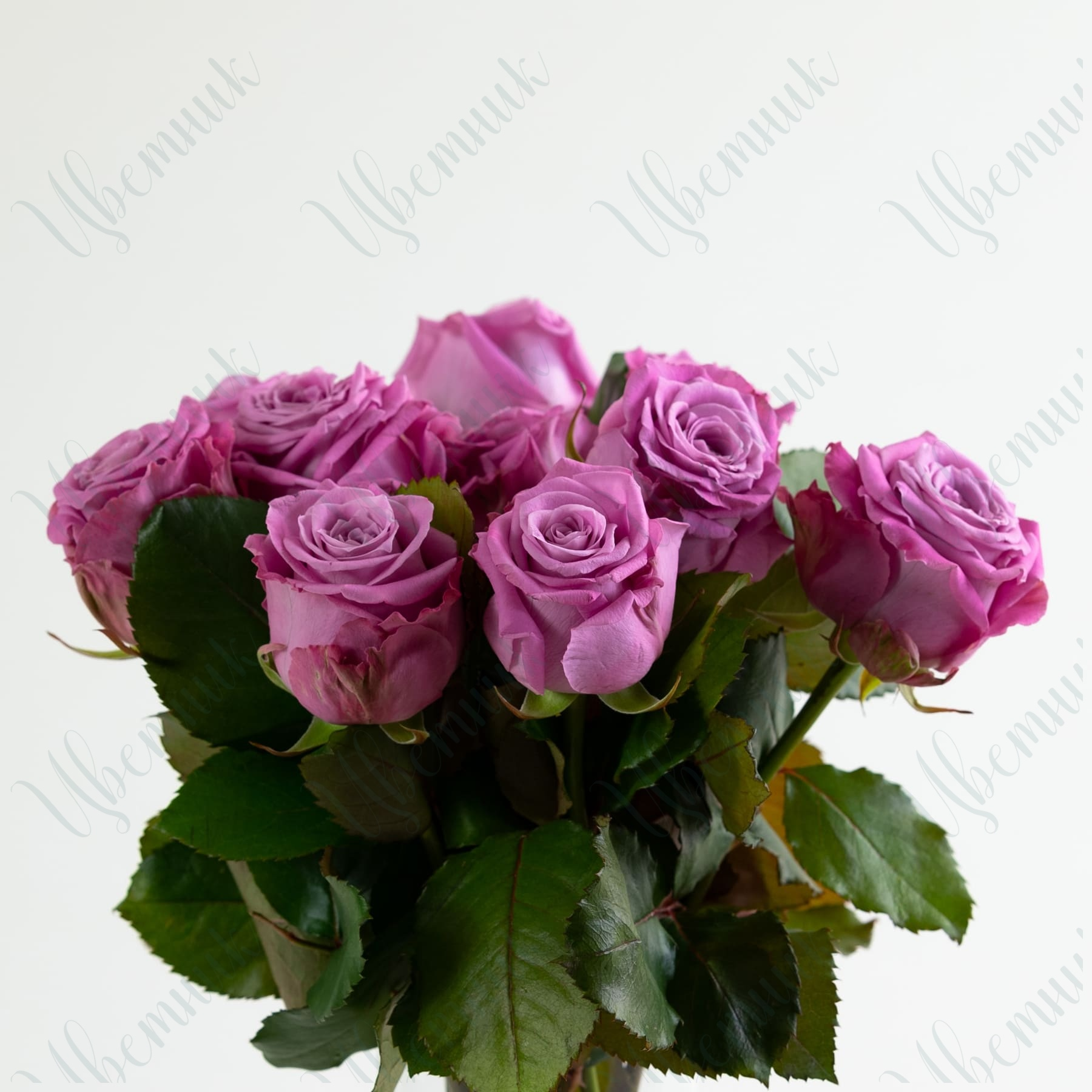 Роза Маритим 50-60 см 1 шт.