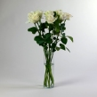 Роза Аваланш 40 см 1 шт.