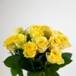 Роза Илиос 40 см 1 шт.