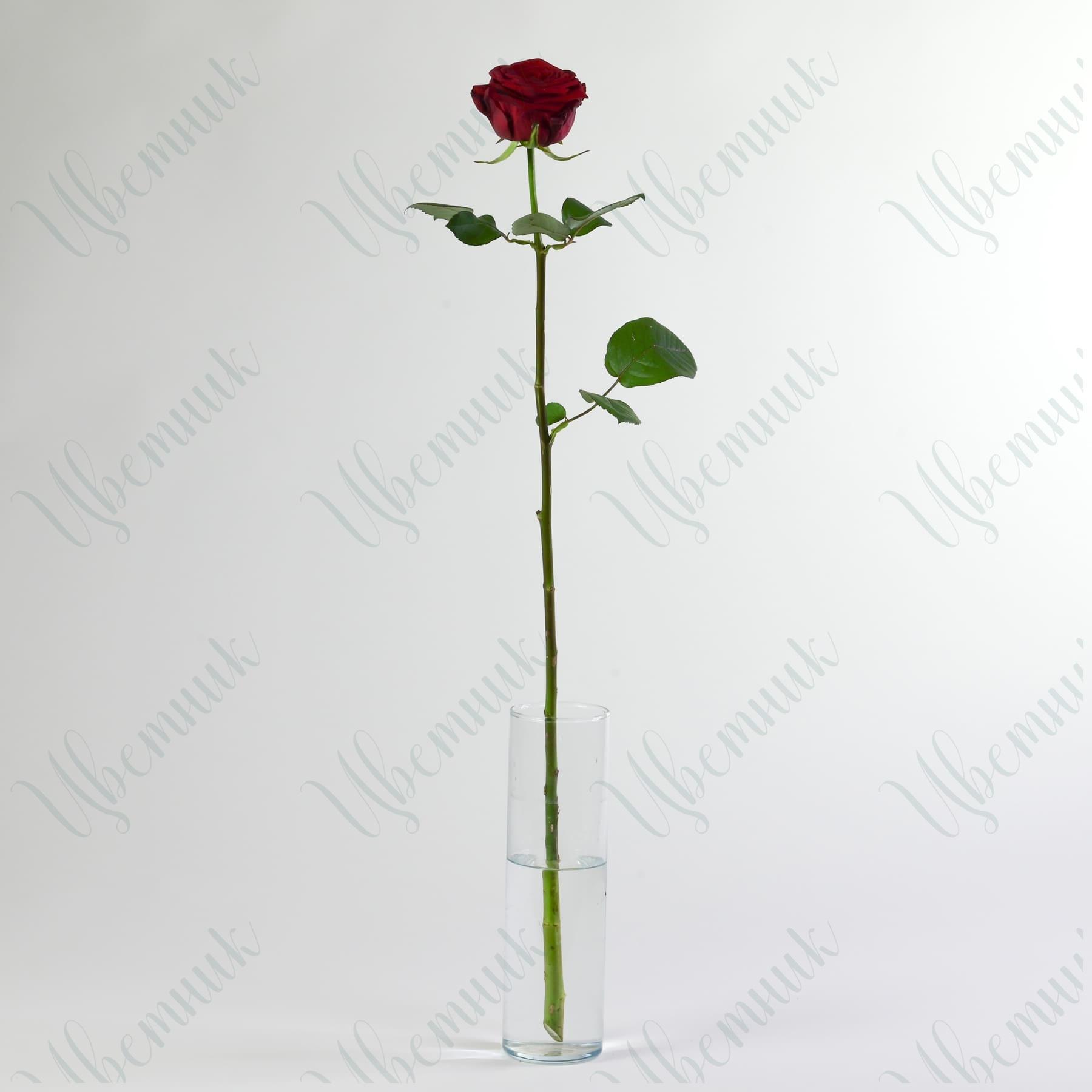 Роза Ред Наоми 40 см 1 шт.