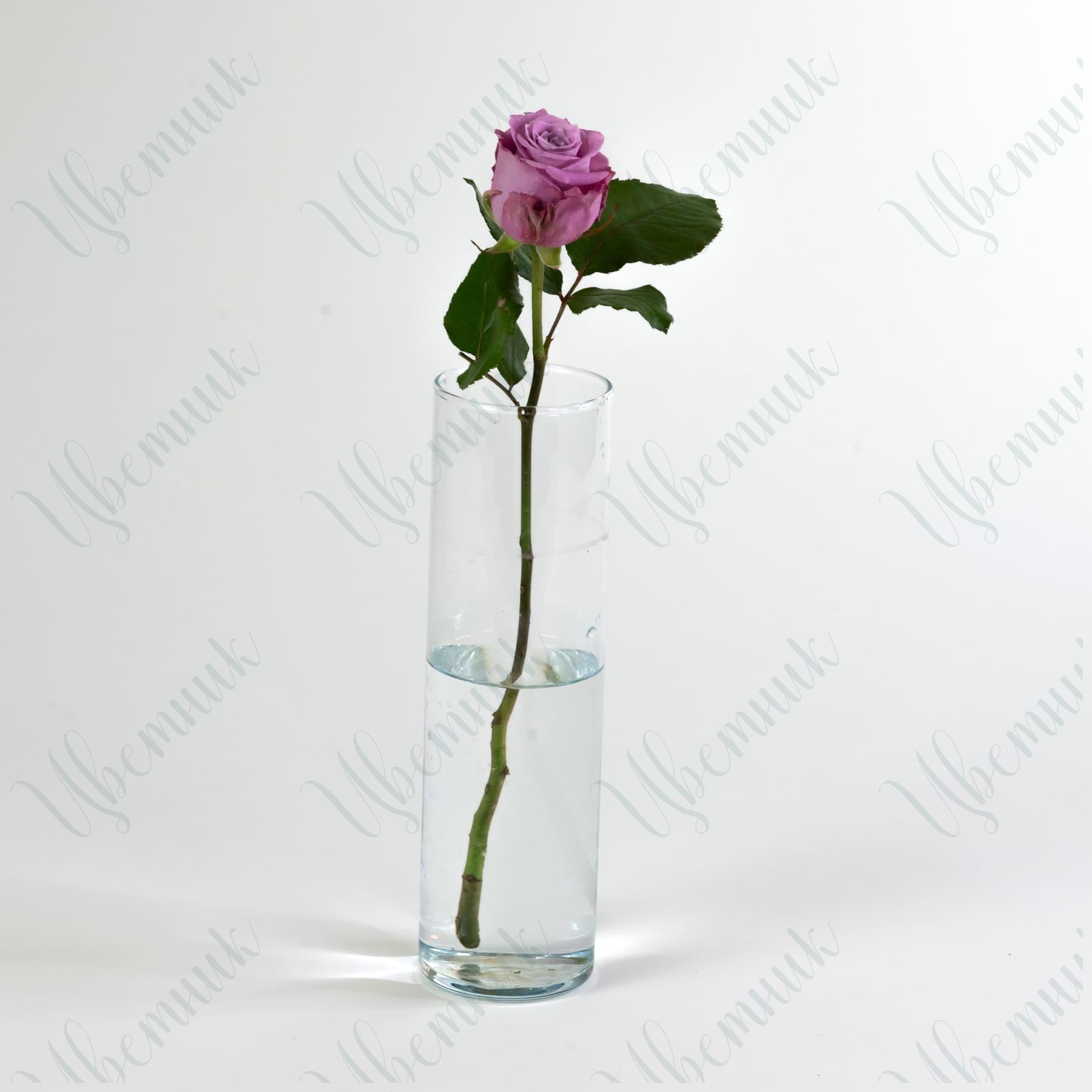 Роза Маритим 40 см 1 шт.